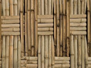 обои Бамбуковый плод в шахматном порядке фото