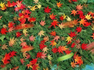 обои Листья на траве фото