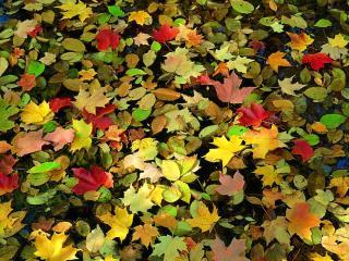 обои Листья на воде фото