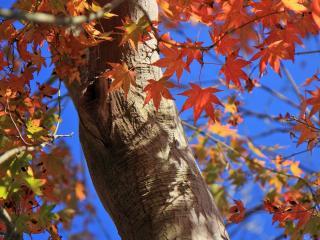 обои Желто - оранжевые листья фото