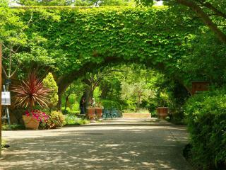 обои Виноградная арка в парке фото