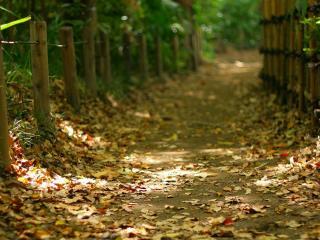 обои Осенняя тропа фото