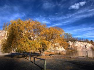 обои Пруд у золотистого осеннего дерева фото