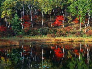 обои У берега пруда красочной осенью фото