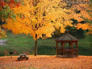 обои Осенний пейзаж - озеро,   беседка и желтое дерево фото