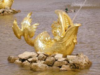обои Фонтан в виде рыбы в Петергофе фото