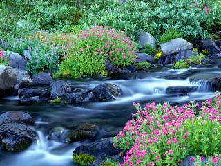 обои Paradise River, Mount Rainier National Park, Washington фото