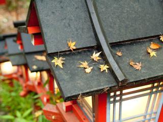 обои Листья на крыше фонаря фото