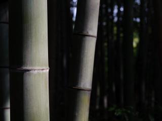 обои Ствол бамбука фото