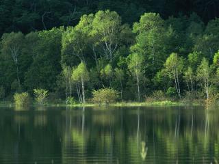 обои Весенние деревья на берегу пруда фото