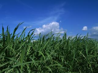 обои Зелёная трава на фоне неба фото