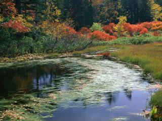 обои Красивая лужайка у осеннего пруда фото