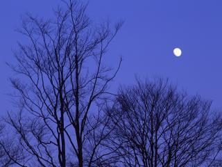обои Весенние деревья и луна фото