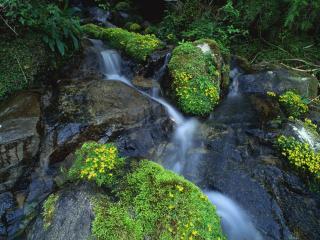 обои Вода точит камни, весенний ручей фото