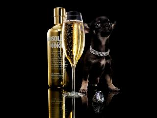обои Brands Absolute Vodka Advertising фото