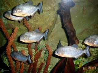 обои Рыбы под водой фото