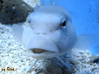 обои Белая рыба фото