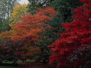 обои Осень во всех красках фото
