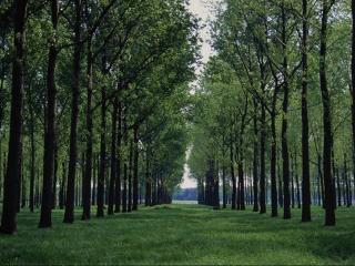 обои Парковые деревья фото