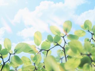 обои Длинные листья и вода фото