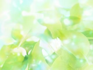 обои Листья и небо зеленое фото