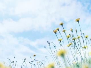 обои Цветочки и небо фото