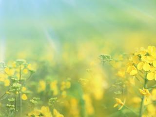 обои Травинки и небо фото