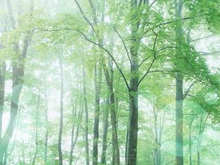 обои Лес и красота фото
