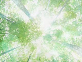 обои Вид вверх в лесу фото