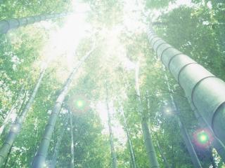 обои Стволы деревьев в лесу фото