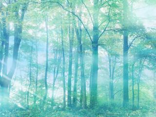 обои для рабочего стола: Зеленый теплый лес