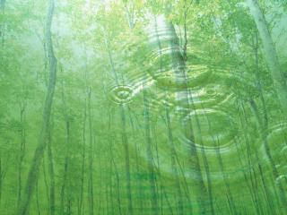 обои Лес в отражении чистой воды фото