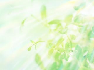 обои Несколько листьев в небе фото