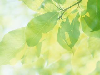 обои Листья на ветке фото