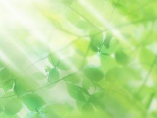 обои Листья идут в небо фото