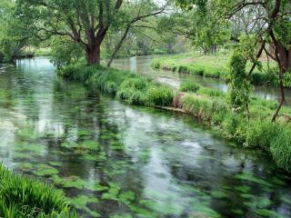 обои Разделенный на две части летний пруд фото