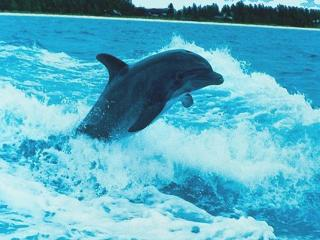 обои Прыжок дельфина фото