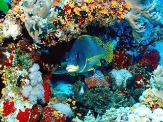 обои Разноцветный подводный мир фото