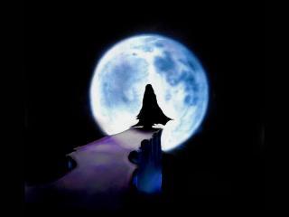 обои Дорога к луне фото