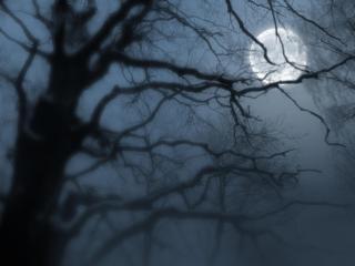 обои Туманное полнолуние фото