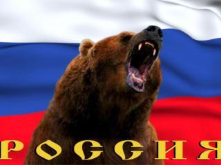 обои Россия медведь фото