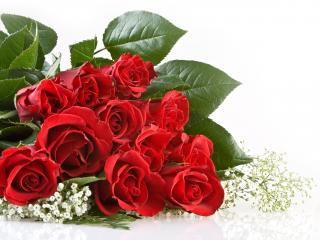 обои Красивый букет роз фото