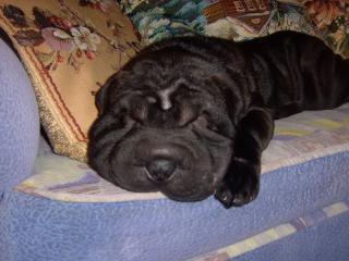 обои Фаня спит,   она устала фото