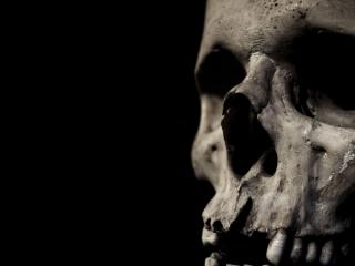 обои Старый череп фото