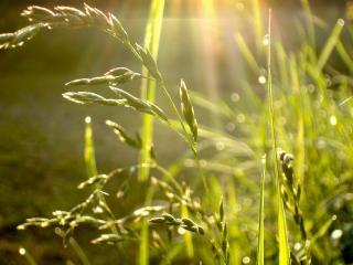 обои Первые лучики солнца на траве фото
