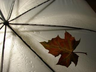 обои Осенний листок прилип к зонтику фото