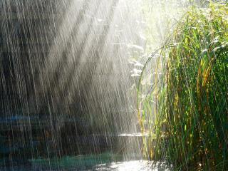 обои Утренний дождь фото