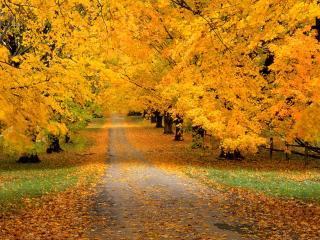 обои Дорога, покрытая листьями фото