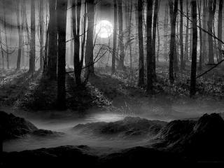обои Темная ночь в лесу фото