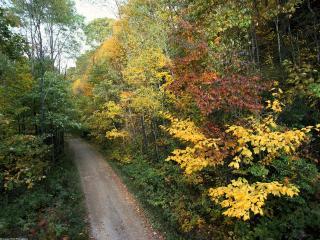 обои Осенняя дорога, Национальный Парк Грейт-Смоки-Маунтинс. Шт. Теннесси фото